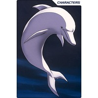 Image of White Dolphin