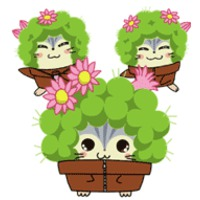 Image of Cactus Brothers