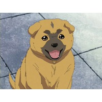 Image of Moko