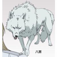 Image of Yatsufusa
