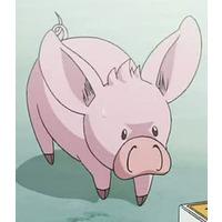 Image of Pig-Berus