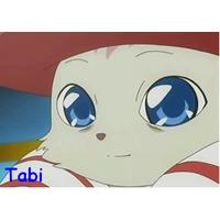 Image of Tabi