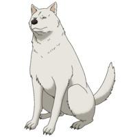 Image of Dog